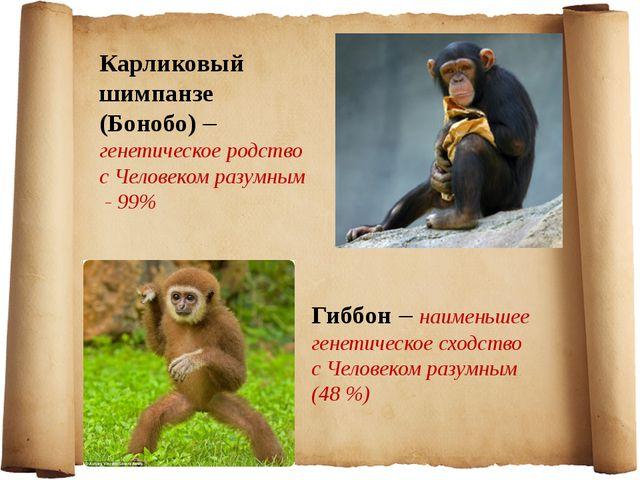 Карликовый шимпанзе (Бонобо) – генетическое родство с Человеком разумным - 99...