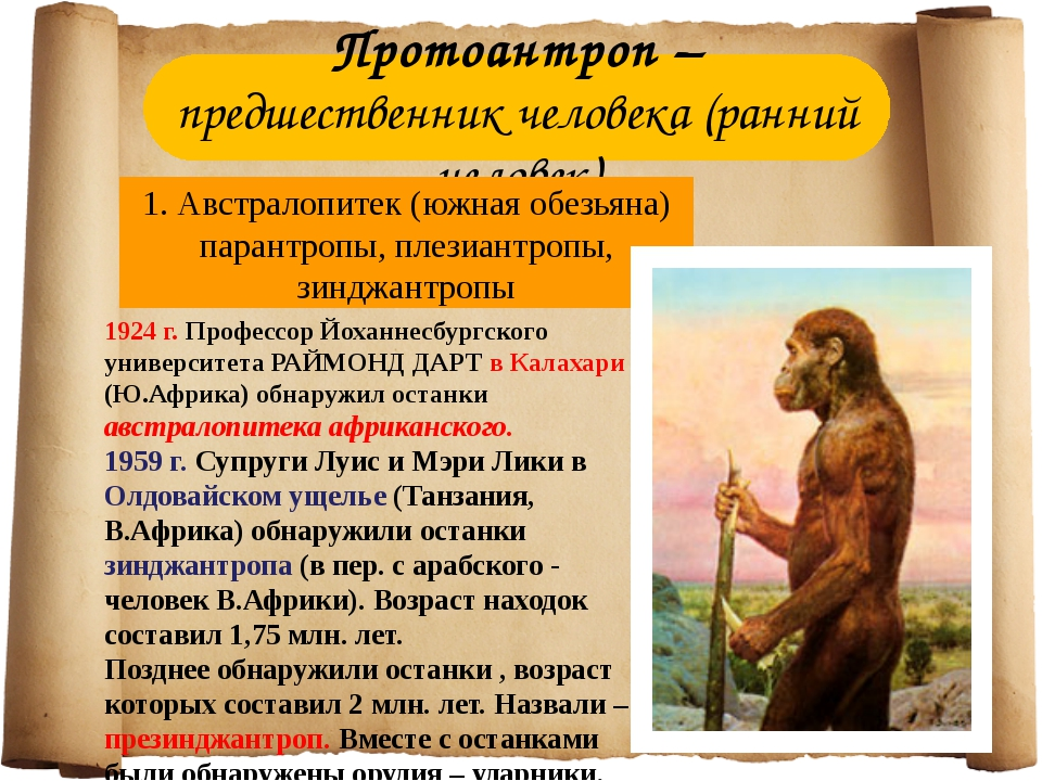 Протоантроп – предшественник человека (ранний человек) 1. Австралопитек (южна...