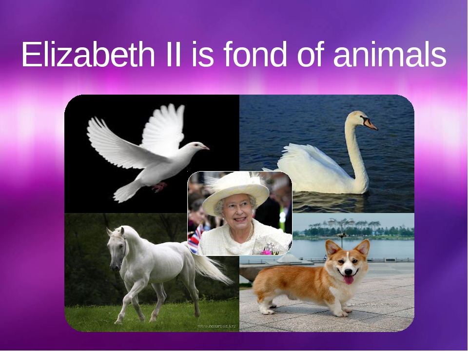 Elizabeth II is fond of animals щелкните, чтобы…