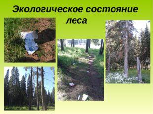 Экологическое состояние леса