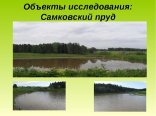 Объекты исследования: Самковский пруд