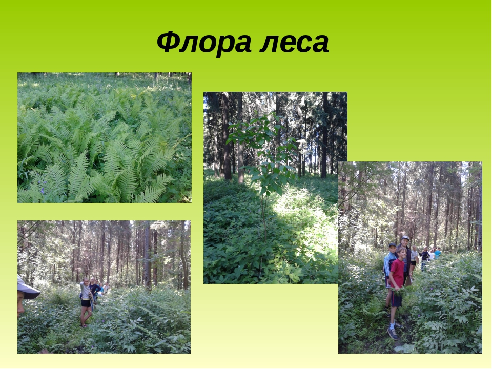 Флора леса
