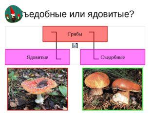 Съедобные или ядовитые? Ядовиты все те грибы, которые при употреблении в пищу