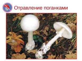 Отравление поганками Самый опасный гриб – бледная поганка. Она является причи
