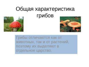 Царство Грибы Общая характеристика грибов Грибы отличаются как от животных, т