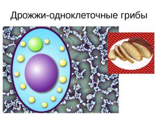 Дрожжи-одноклеточные грибы Результатами деятельности таких грибов, как дрожжи