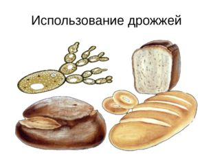 Использование дрожжей Дрожжи, как и все остальные грибы, питаются готовыми ор