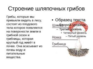 Строение шляпочных грибов Грибы, которые мы привыкли видеть в лесу, состоят и