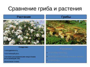 Сравнение гриба и растения Сходство: неподвижность, постоянный рост, питание