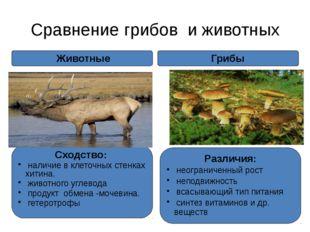 Сравнение грибов и животных Грибы Сходство: наличие в клеточных стенках хитин