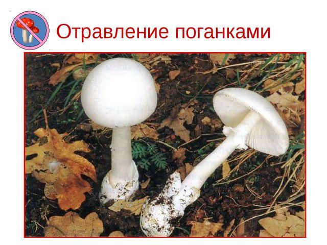 Отравление поганками Самый опасный гриб – бледная поганка. Она является причи...