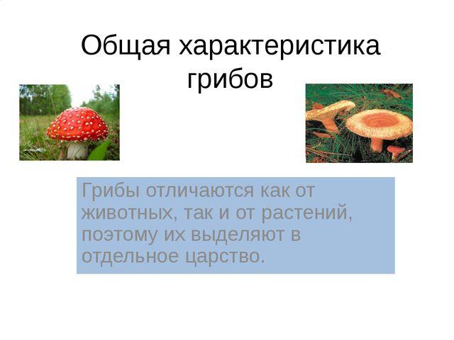 Царство Грибы Общая характеристика грибов Грибы отличаются как от животных, т...