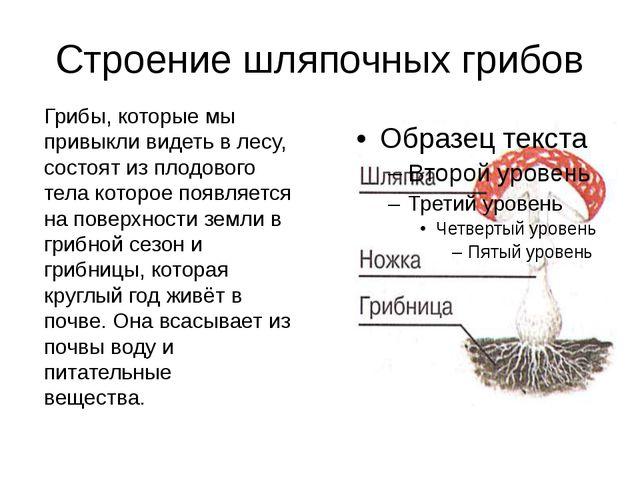 Строение шляпочных грибов Грибы, которые мы привыкли видеть в лесу, состоят и...