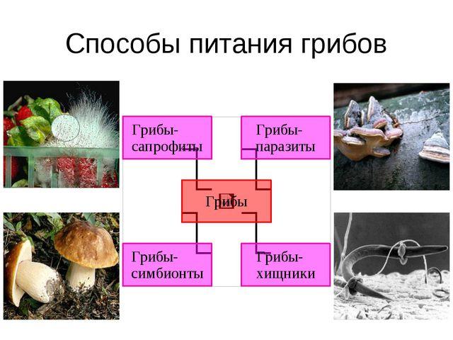 Способы питания грибов Пищеварение у грибов наружное – они выделяют ферменты,...