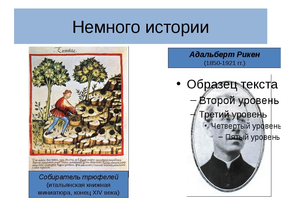 Адальберт Рикен (1850-1921 гг.) Немного истории Собиратель трюфелей (итальянс...