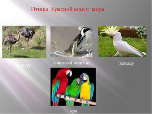 Птицы Красной книги мира нанду очковый пингвин какаду ара