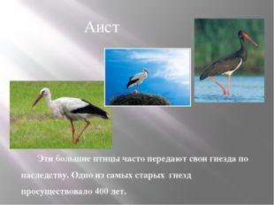 Эти большие птицы часто передают свои гнезда по наследству. Одно из самых ста
