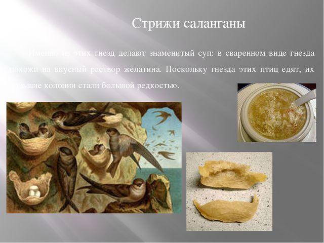 Именно из этих гнезд делают знаменитый суп: в сваренном виде гнезда похожи на...