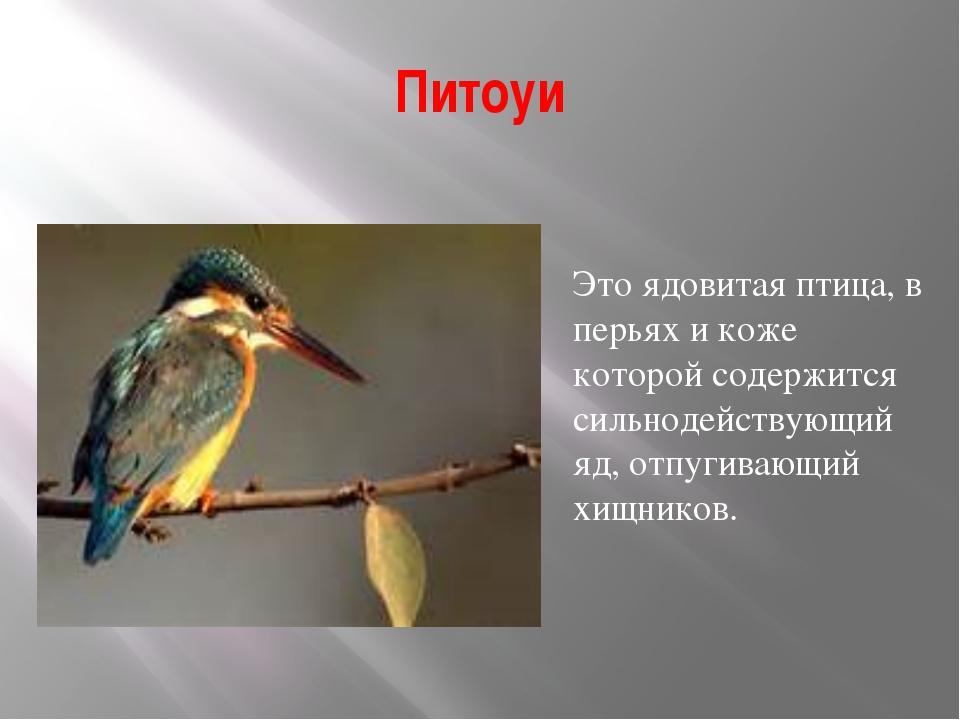 Питоуи Это ядовитая птица, в перьях и коже которой содержится сильнодействующ...