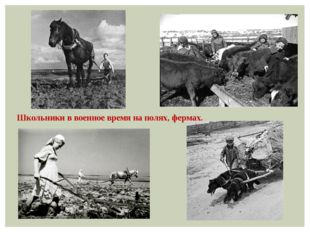 Школьники в военное время на полях, фермах.