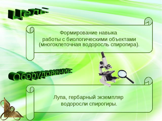 Формирование навыка работы с биологическими объектами (многоклеточная водорос...