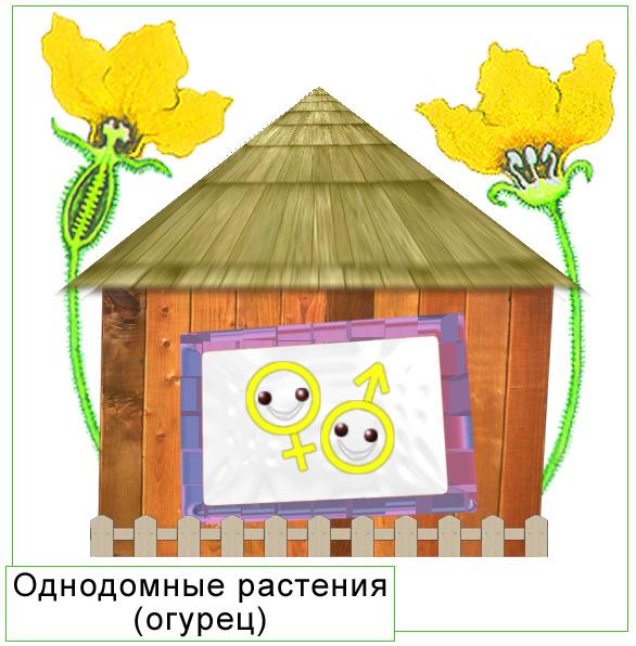 hello_html_6ff12a85.jpg