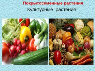 Культурные растения Покрытосеменные растения