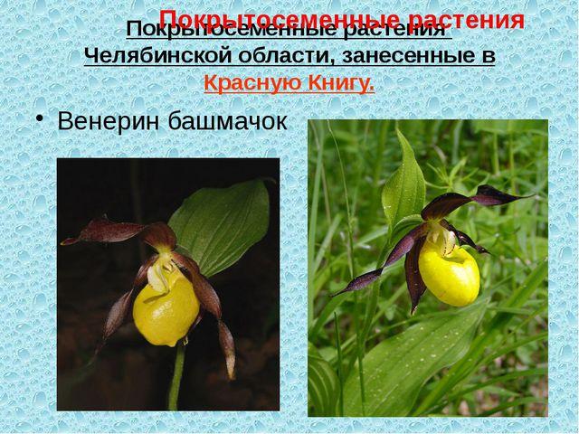 Покрытосеменные растения Челябинской области, занесенные в Красную Книгу. Вен...