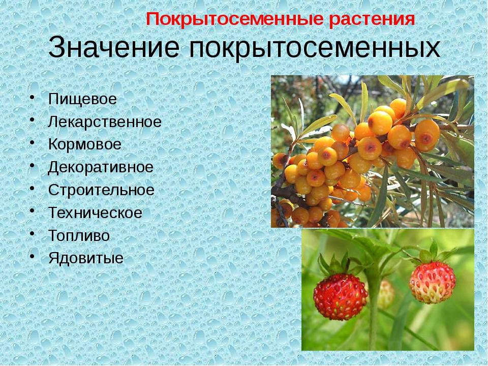 Значение покрытосеменных Пищевое Лекарственное Кормовое Декоративное Строител...