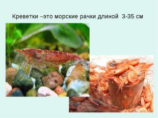 Креветки –это морские рачки длиной 3-35 см