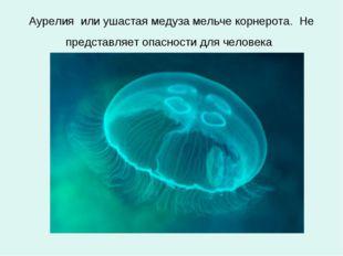 Аурелия или ушастая медуза мельче корнерота. Не представляет опасности для че