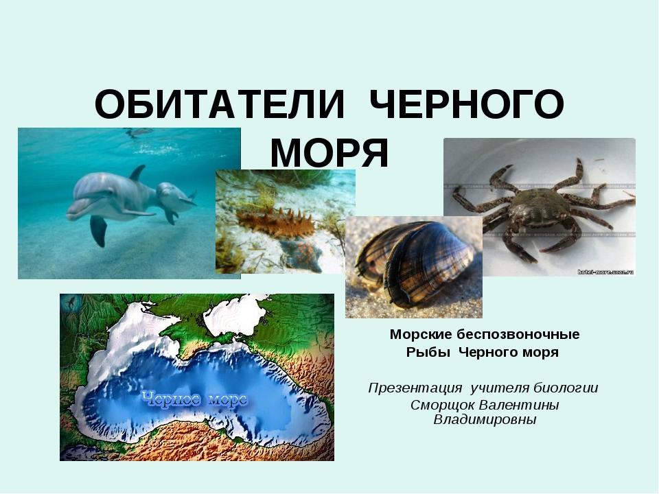 ОБИТАТЕЛИ ЧЕРНОГО МОРЯ Морские беспозвоночные Рыбы Черного моря Презентация у...