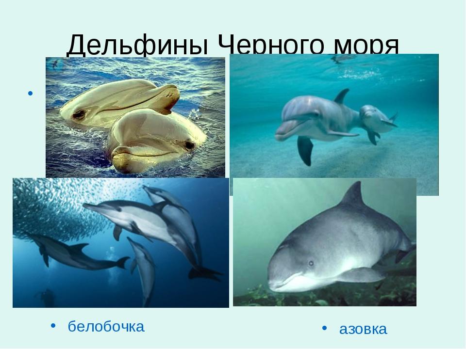 Дельфины Черного моря delfini.jpg белобочка aзовка