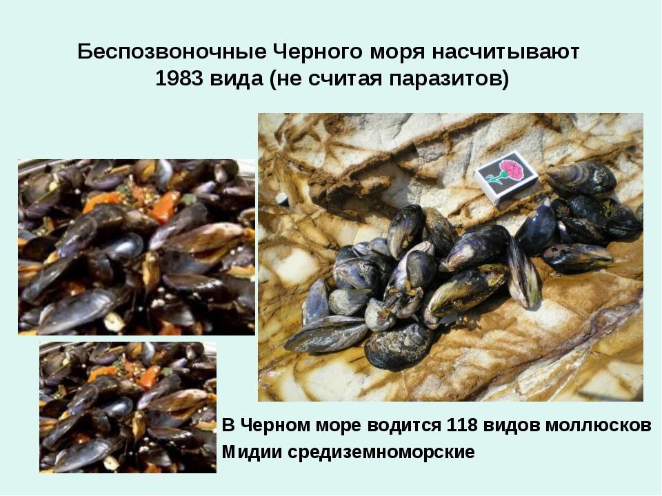 Беспозвоночные Черного моря насчитывают 1983 вида (не считая паразитов) В Чер...
